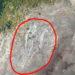 Геоглиф на Риша планина